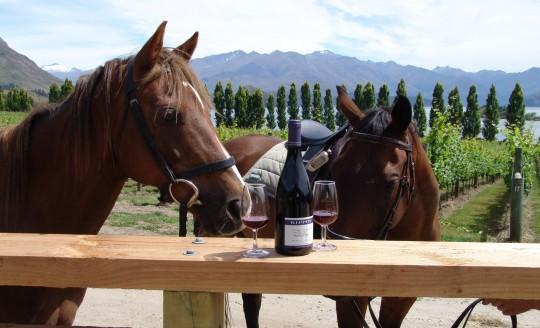 HORSE TREKKING whare kea luxury lodge